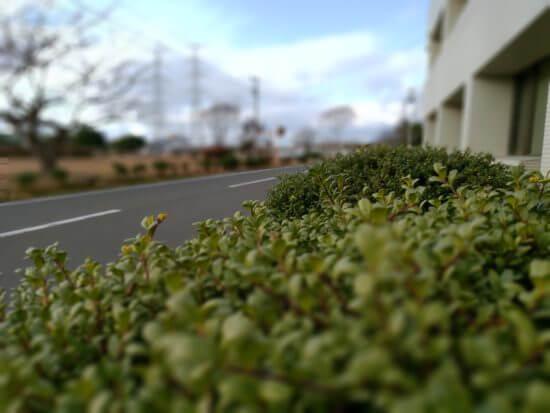 zenfone5zのカメラ撮影 ポートレート2