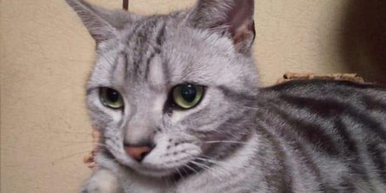インカメラで猫を撮影