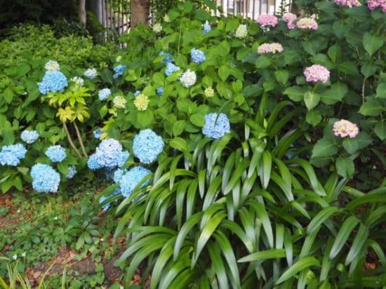 ローズガーデンの花9