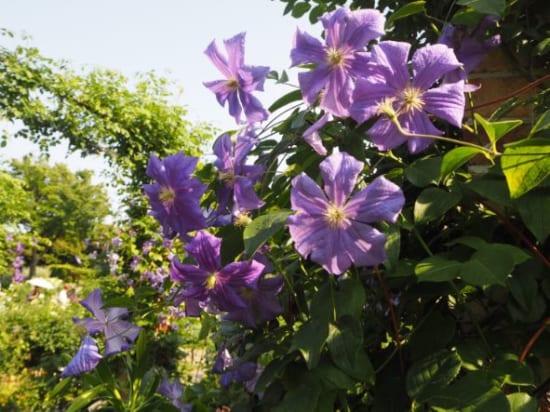 ローズガーデンの花4