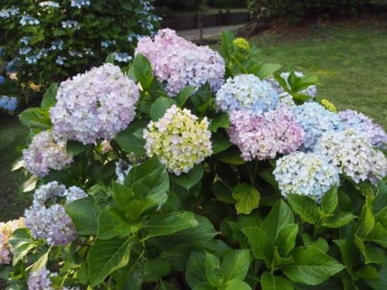ローズガーデンの花5