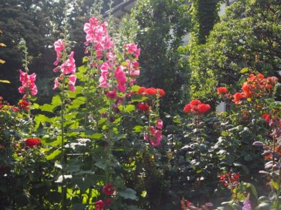 ローズガーデンの花7