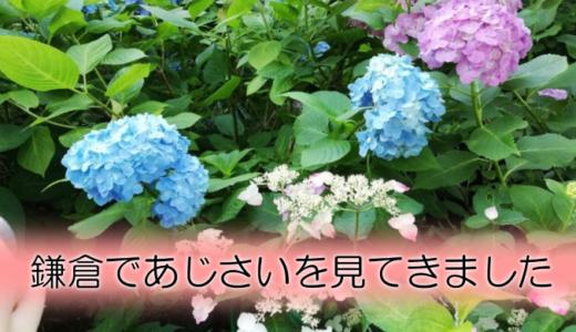 鎌倉のあじさい巡りレポ!明月院&長谷寺を散策してきました(鎌倉文学館も立ち寄り)