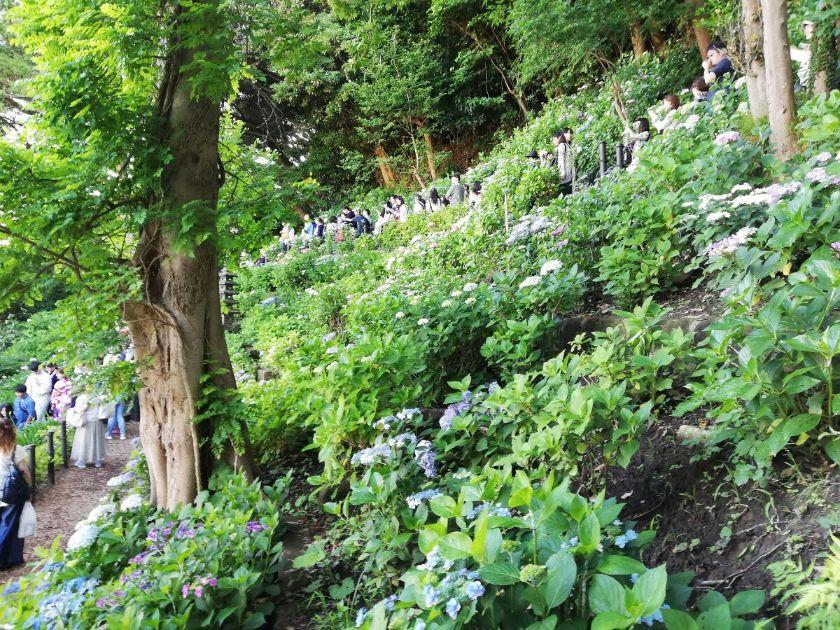 長谷寺の行列3